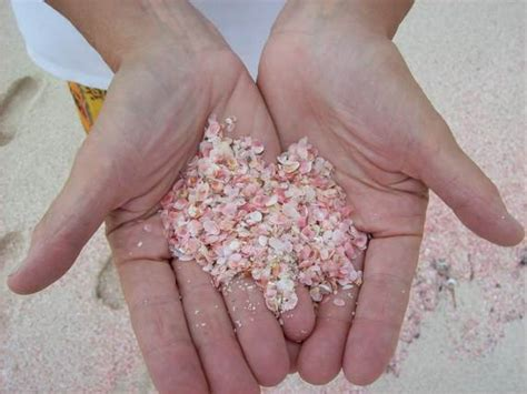 Pink Sands Harbour Island - Bahamas Holiday - family